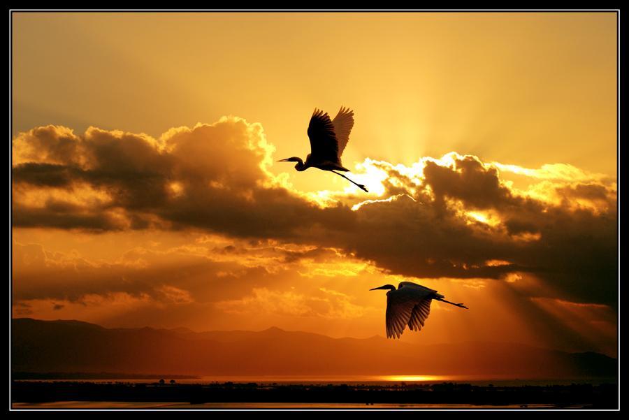 Восход Солнца Бесплатные изображения на Pixabay