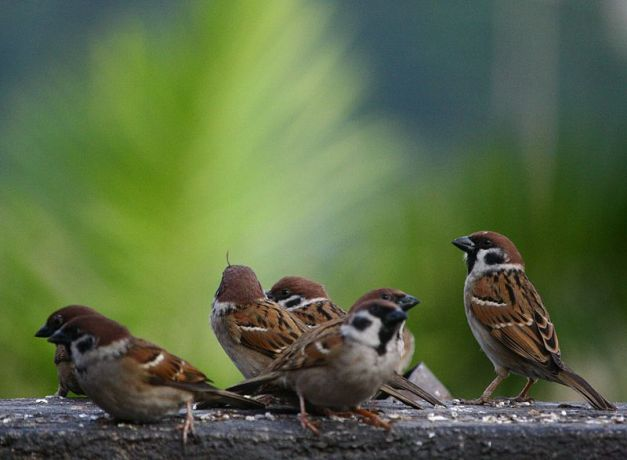 Group of Sparrows by Jimmy Palma Gil