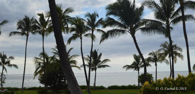 Ka Olina Palm Trees - by D G Vachal